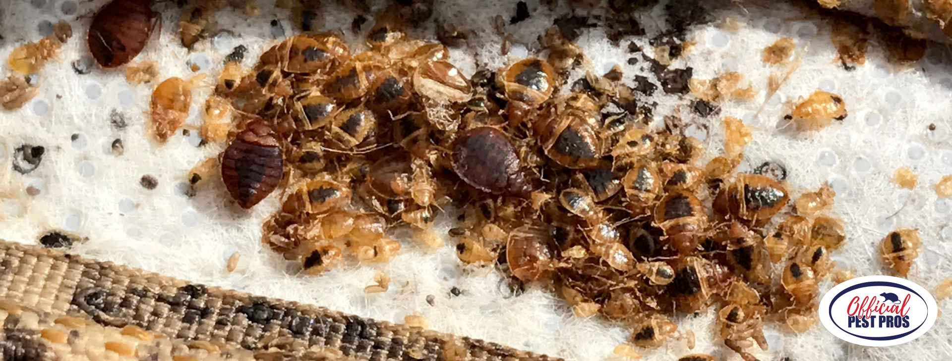 Bed Bugs Control Selma California