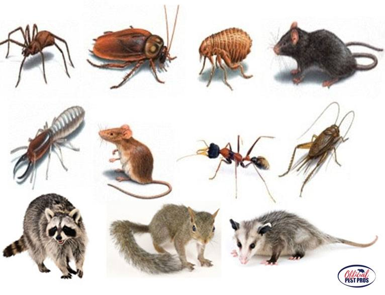 Local  Reedley CA Pest Exterminator