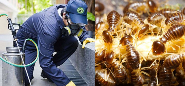 Pest Control in Clovis California