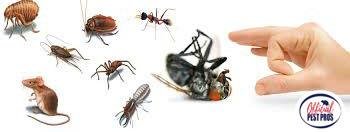 Pest Control  Parlier California