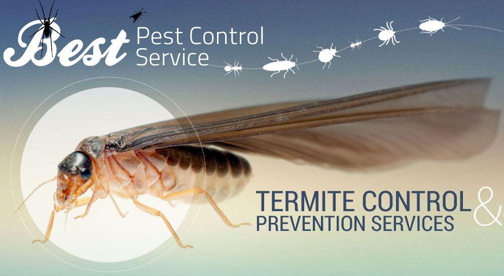 Termite Exterminator Clovis CA